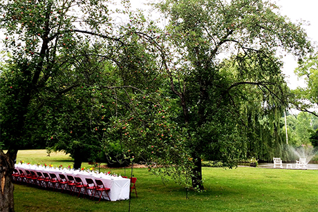 Apple-orchard---edited